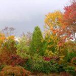 Wetland diversity restoration, Manheim