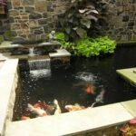 Courtyard koi pond