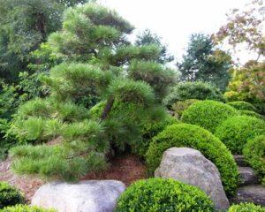 HL Specimen trees '13-08-16 019