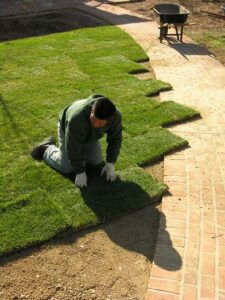 Sod installation 1