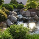 Natural stream purifies koi pond
