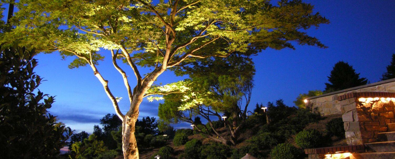 TreeLighting