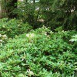 Grace notes in woodland vignette, Elizabethtown