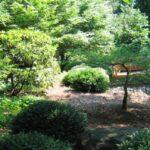 Sunny nook in woods-edge garden