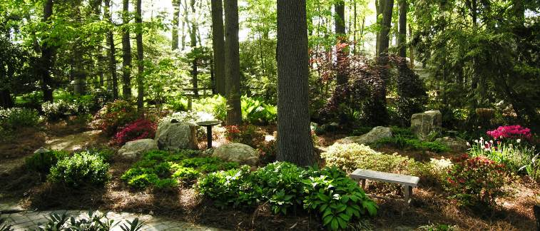 Woodland Garden Design woodland garden design especially for front yard fruit and nut trees guild plantings Dappled Sunlight On Boulders And Azaleas By Nature Path Mechanicsburg