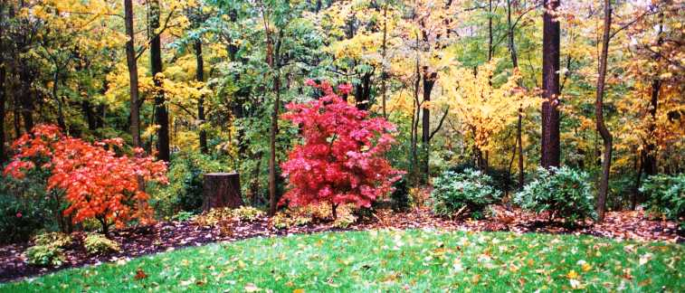 Natural gardens hanselman landscape and gardens fall colors glow in formerly dark woods edge workwithnaturefo