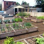 Drip irrigation for rooftop vegetable garden