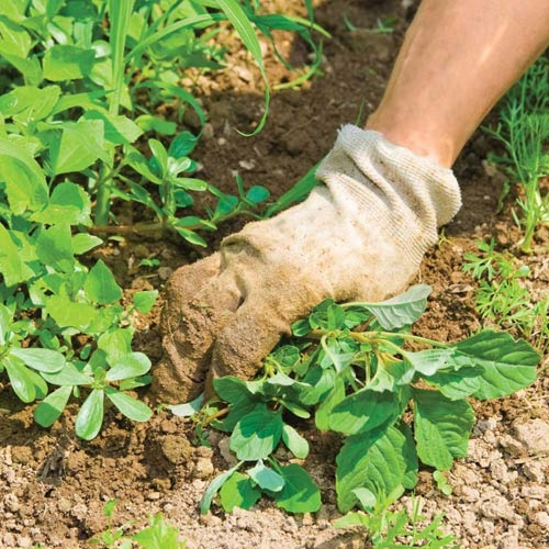 weed control hanselman landscape and gardens