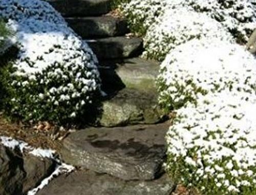 Patterns winterization