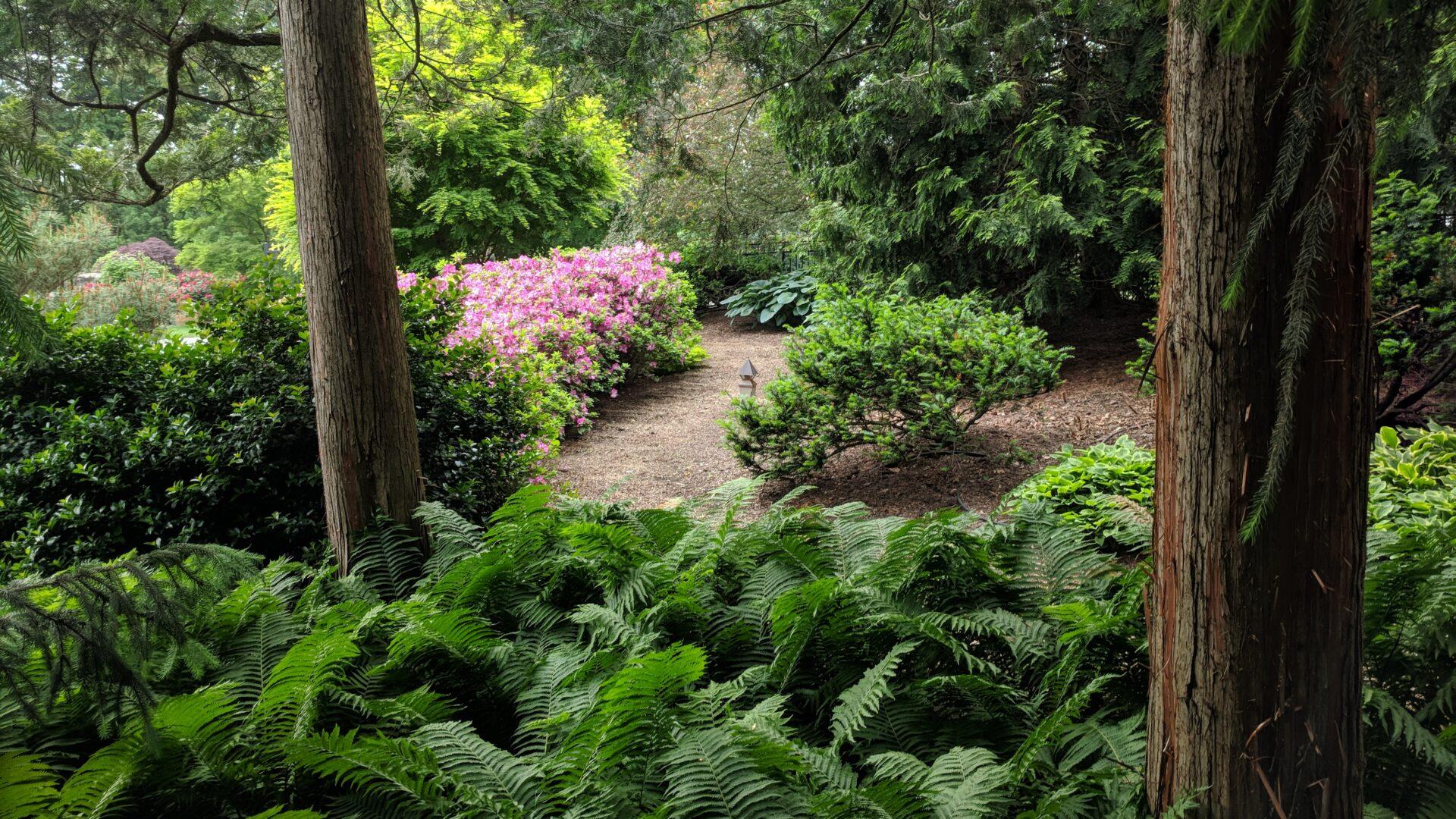 Hanselman Landscape and Gardens Woodland path Elizabethtown1