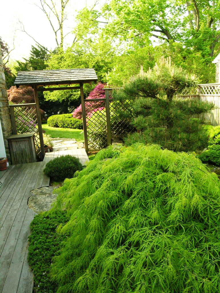 Japanese courtyard garden by home office window, Merion Station, PA