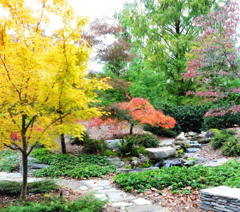 Natural gardens are about tending a community of plants which thrive and bring joy as if they may have been there first, Cornwall, PA