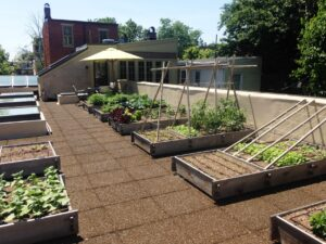 Rooftop garden with raised planters and drip irrigation, Harrisburg, PA