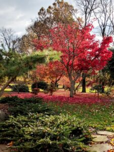 Fall is brilliant in this woodland garden, Manheim, PA
