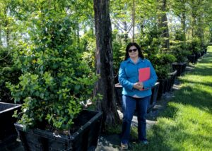 Deer-resistant native 'Satyr Hill' Holly, Manheim, PA
