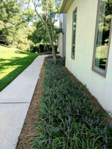 Modern garden design with clean, uncluttered spaces, is also easy to maintain, Lititz, PA