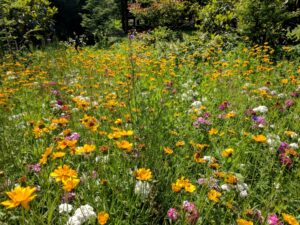 Sunny open areas can become wildflower meadows, Manheim, PA