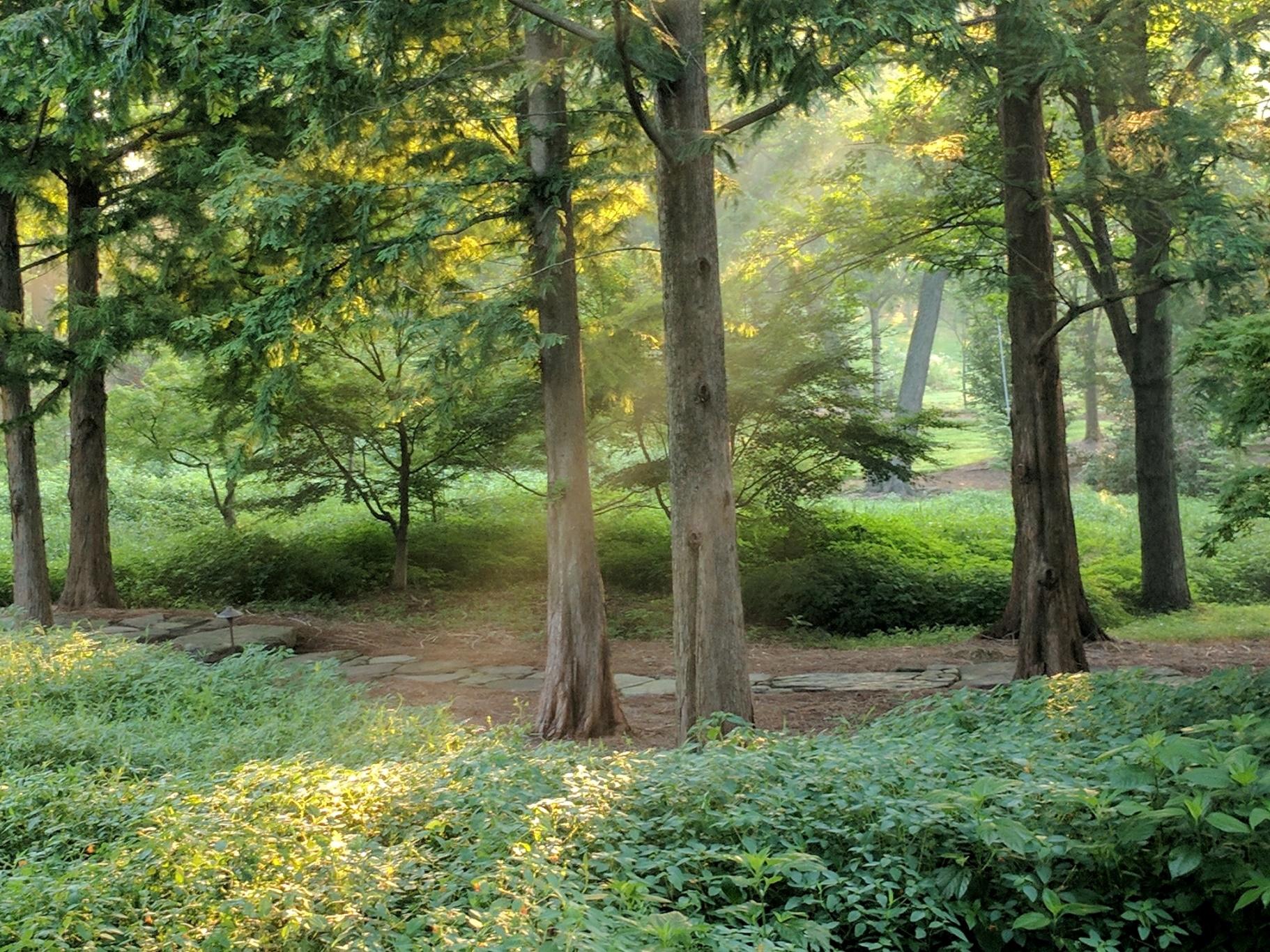 Shafts of sunlight brighten woodland garden, Manheim, PA