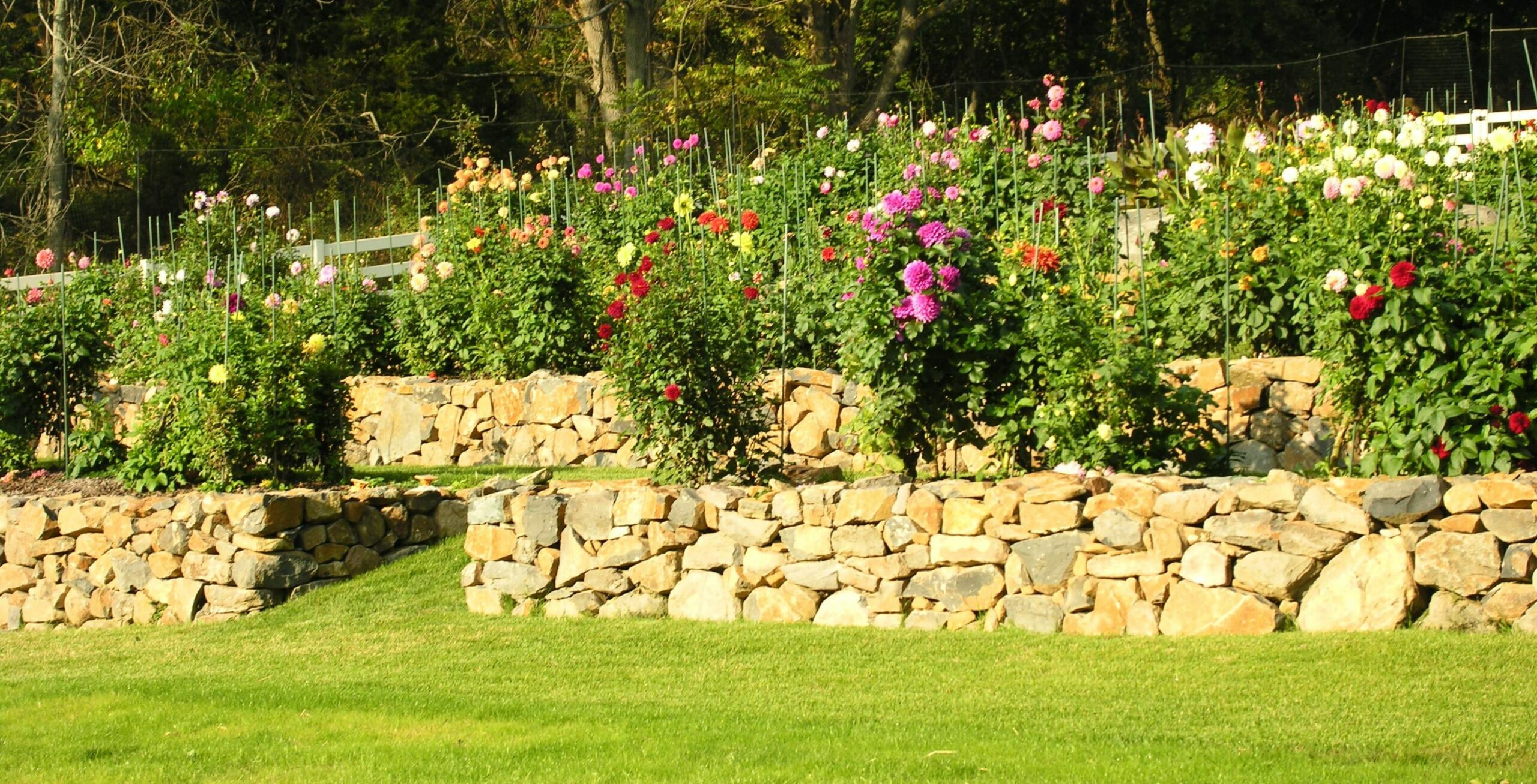 Stroll hillside terraces through a well-tended Dahlia garden and support  Brittany's Hope, Elizabethtown, PA | Hanselman Landscape and Gardens