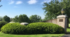 Skilled pruning restores beauty of old Yew hedges, Manheim, PA