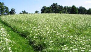 Sunny field becoming wildflower meadow, Hershey, PA