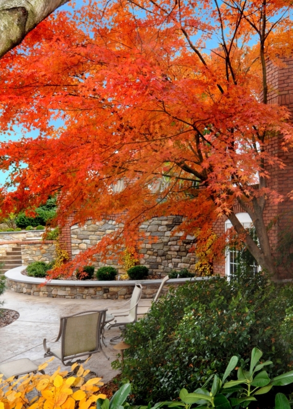 Enduring stone walls with brilliant fall color, Lancaster, PA