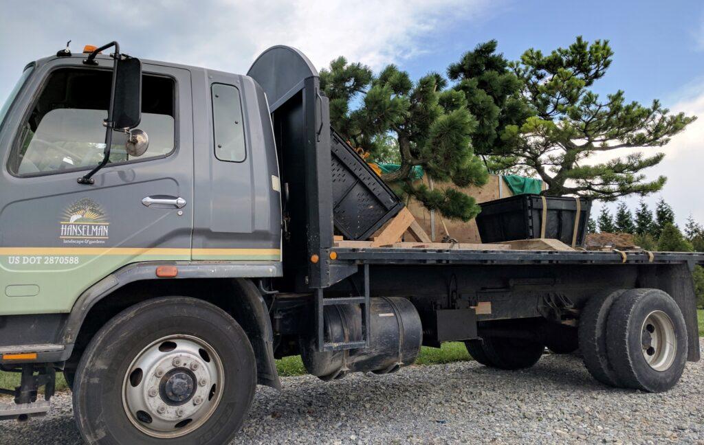 'Banshoho' Dwarf Japanese Black Pines leaving for a new home, Manheim, PA