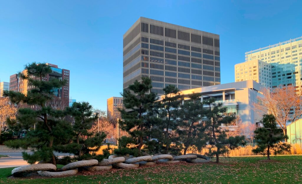 Japanese Black Pines as living part of Ring Stone sculpture at MIT Sloan Finance building, Cambridge, MA