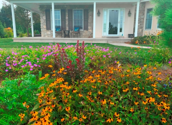 Wildflowers welcome guests at country home entrance garden, Manheim, PA
