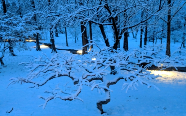 Path lights illuminate woodland path on snowy evening, Manheim, PA