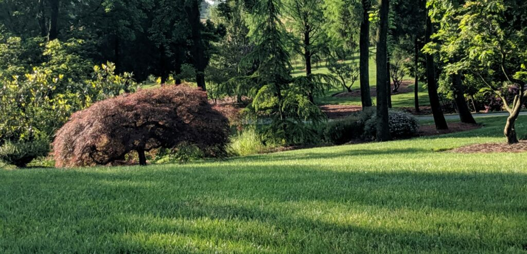 Seeded country lawn, Manheim, PA