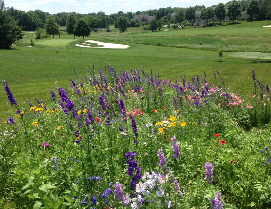 If the golf course provides the lawns, consider a meadow to enjoy with pollinator friends, Lititz, PA