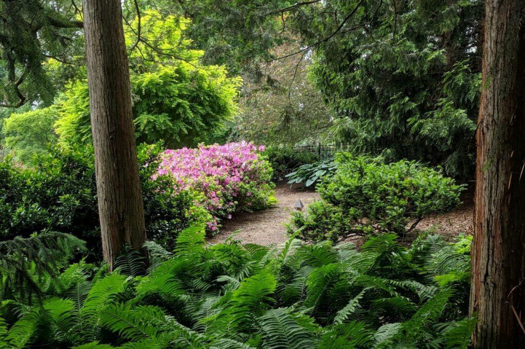 Spring blossoms along a woodland garden path, Elizabethtown, PA