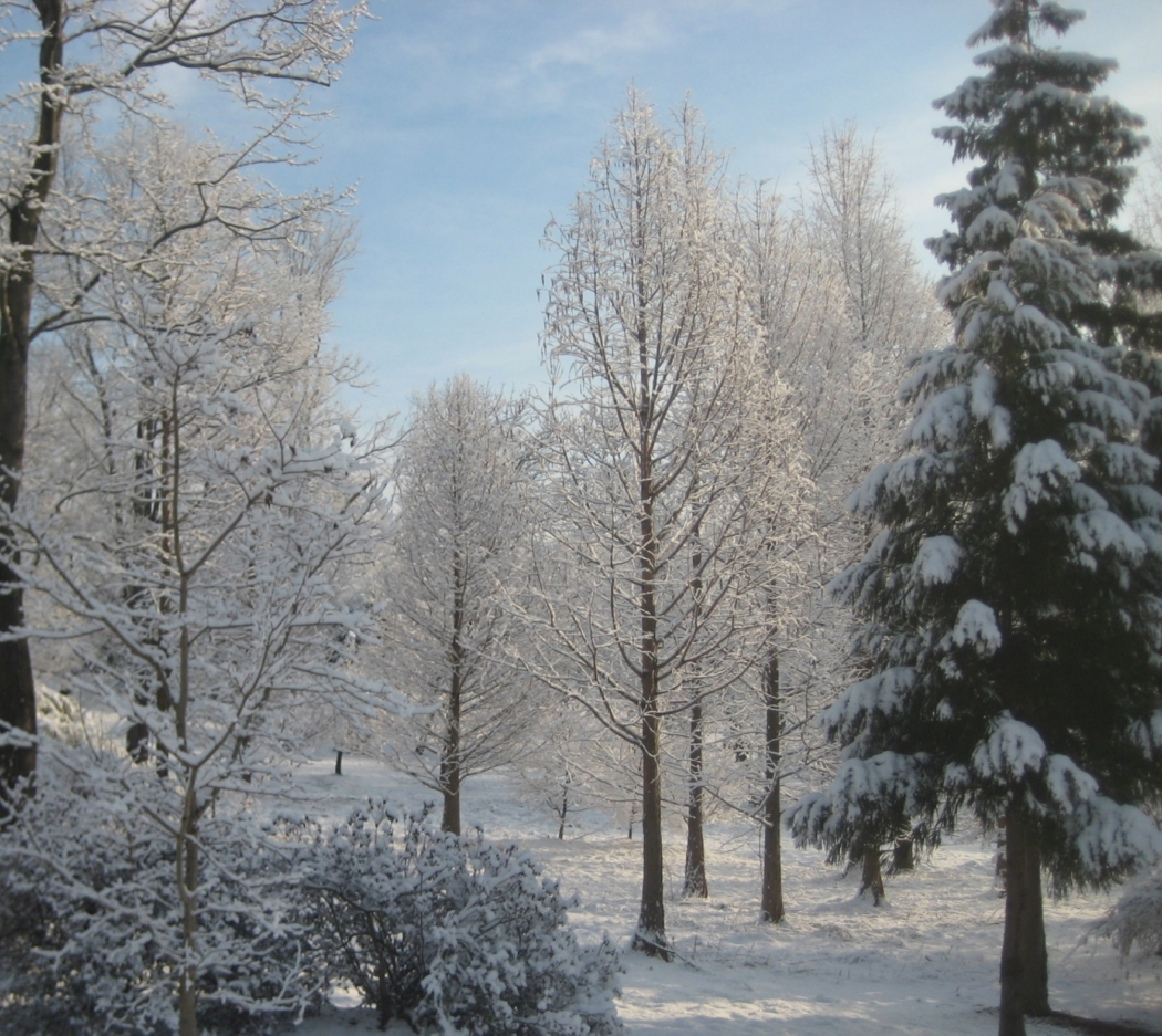 Winter adds delicate beauty to this young woodland garden, Manheim, PA