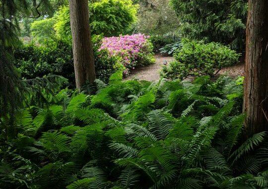 Do you have a life-enriching garden? 167987573 5551223781562083 5905418230906795476 n