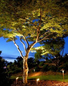 The Wonder of Trees 82184495 3607871392564008 8480766732472942592 n e1628805439296