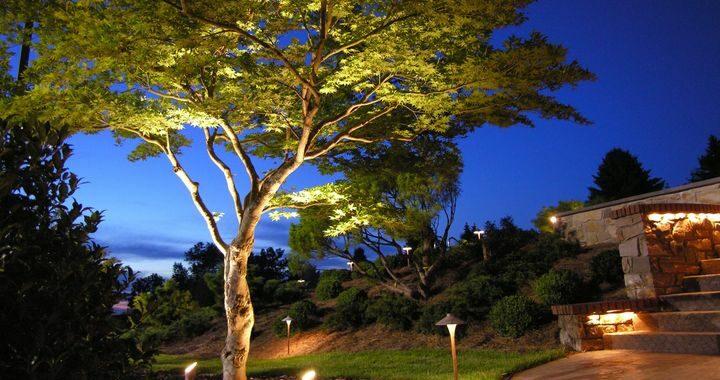 The Wonder of Trees 84202881 3674060042611809 1879524241880121344 n