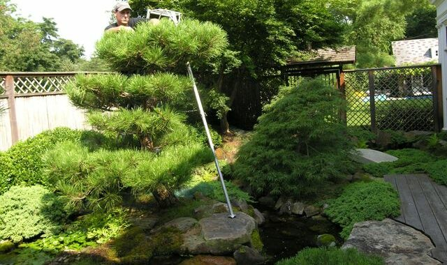CARE TO CARE: Realizing your Garden Vision with Appropriate Care 95582008 4010353918982418 2465083079241236480 n
