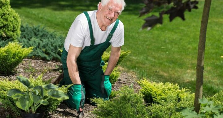 GARDENING: A COVID-PERMITTED ACTIVITY YOU CAN FEEL GOOD ABOUT 99066327 4086372701380539 8547775480785272832 n