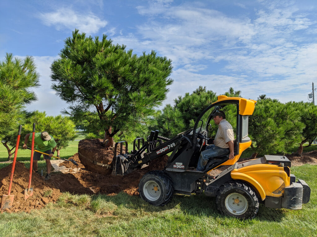 Landscape Design Hanselman Landscape gardens Build Phase PHoto skid steer and tree web