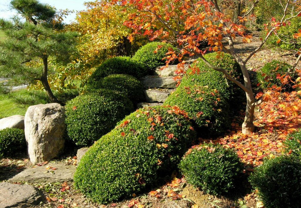 Garden Care Tips for Early Autumn 241846861 6371421682875618 7596973922573592641 n